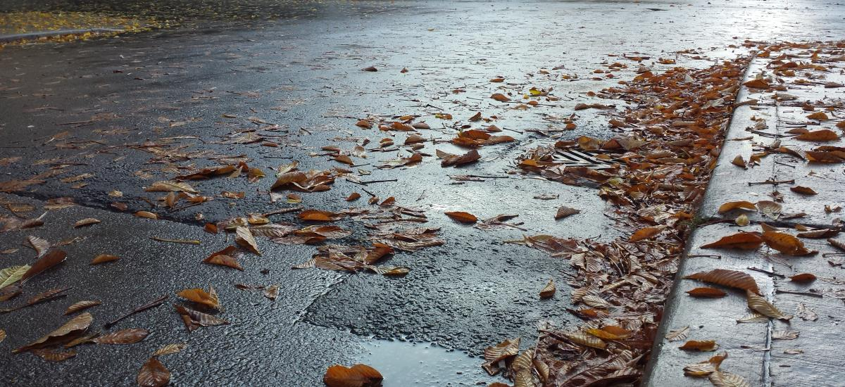 Wet leaves are scattered on dark pavement